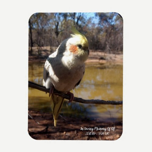 Cute Cockatiel Photo Magnet