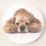Cute Cocker Spaniel Beverage Coaster