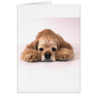 Cute Cocker Spaniel Card