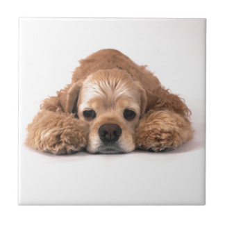 Cute Cocker Spaniel Ceramic Tile