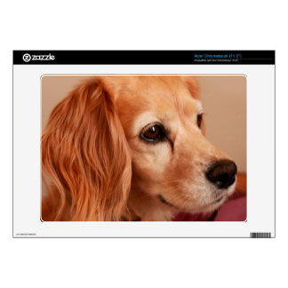 cute cocker spaniel  golden side view decal for acer chromebook