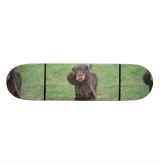 Cute Cocker Spaniel Skate Board Decks
