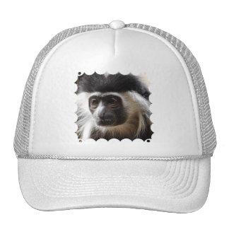 Cute Colobus Monkey Hat
