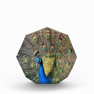 Cute colorful Peafowl Acrylic Award
