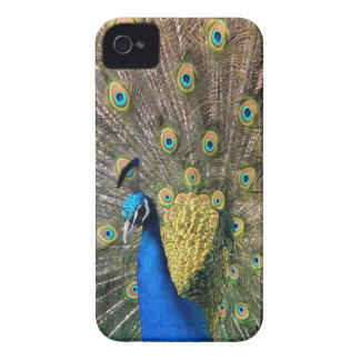 Cute colorful Peafowl Case-Mate iPhone 4 Cases