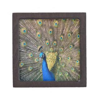 Cute colorful Peafowl Jewelry Box