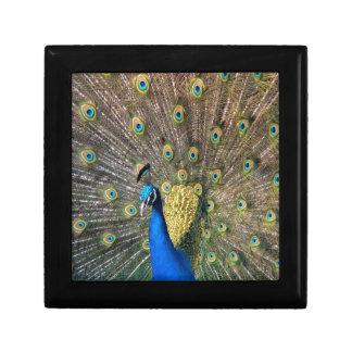 Cute colorful Peafowl Keepsake Box