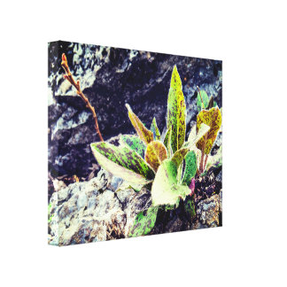 Cute Colorful Plant On The Rock Canvas Print