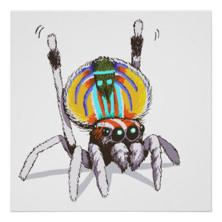 Cute Colourful Peacock Spider Drawing Art Poster