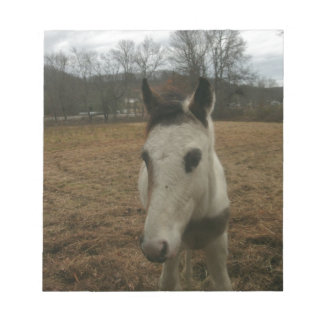 Cute Colt (baby horse) Notepad