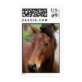 Cute Colt Postage Stamp