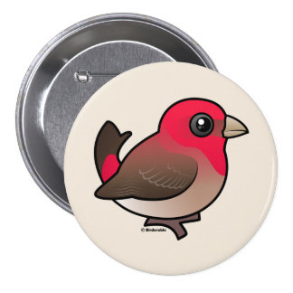 Cute Common Rosefinch 3 Inch Round Button