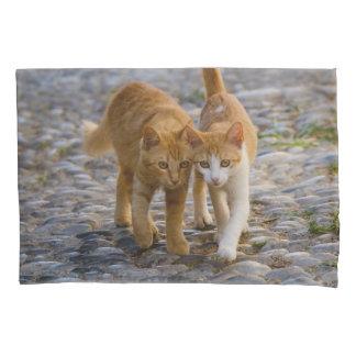 Cute Companioned Kittens Walk the Same Path Photo Pillowcase