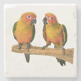 Cute Conure Coasters