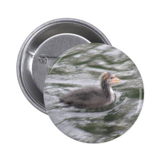 Cute Coot Chick on Choppy Waters Button