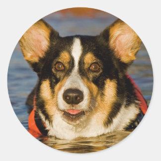 Cute Corgi Classic Round Sticker