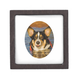 Cute Corgi Design Gift Box