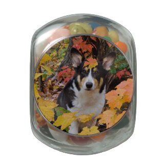 Cute Corgi in Fall Colors Glass Jars