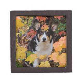 Cute Corgi in Fall Colors Keepsake Box