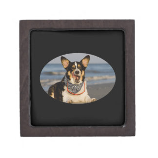 Cute Corgi Licking his Chops Jewelry Box