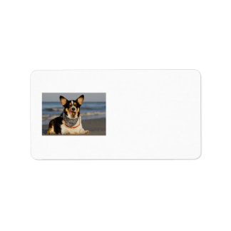 Cute Corgi Licking his Chops Personalized Address Labels