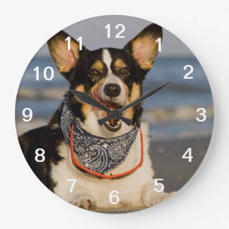 Cute Corgi Licking his Chops Large Clock