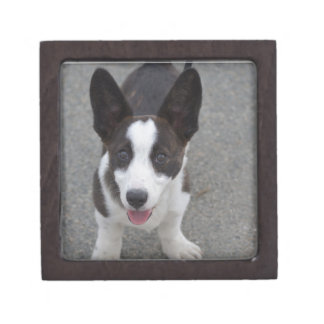 Cute Corgi Puppy Jewelry Box