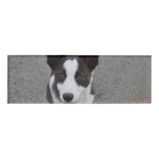 Cute Corgi Puppy Name Tag
