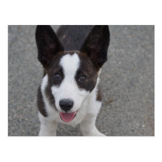 Cute Corgi Puppy Postcard