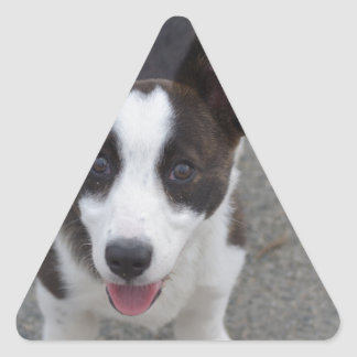 Cute Corgi Puppy Triangle Sticker