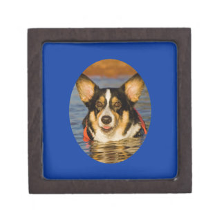 Cute Corgi with Blue Background Gift Box