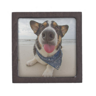 Cute Corgi with Tongue Out Gift Box