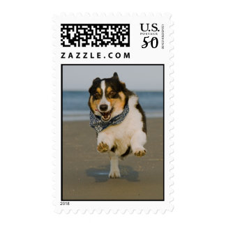 Cute Cori Running & Jumping on Beach Postage
