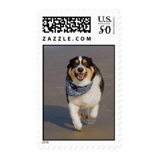 Cute Cori Running on Beach Postage