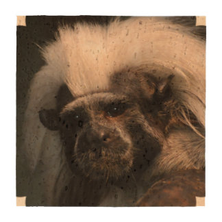 Cute Cotton Topped Tamarin Drink Coaster