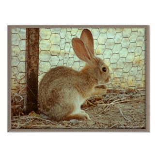 Cute Cottontail Bunny Poster