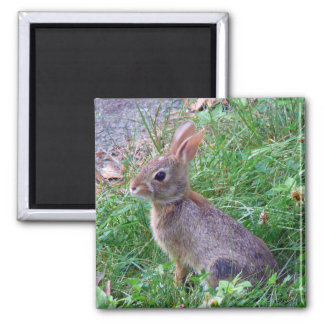 Cute Cottontail Bunny Rabbit 2 Inch Square Magnet