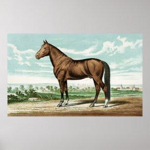 Vintage Horse Posters Photo Prints
