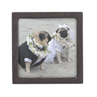 Cute couple bride and groom pugs gift box