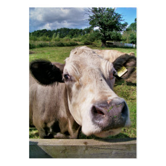 CUTE COW BUSINESS CARD TEMPLATES