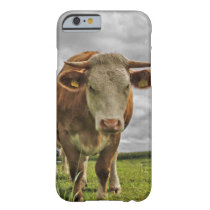 Cute Cow in Pasture Barely There iPhone 6 Case