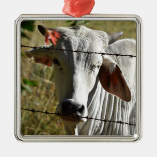 CUTE COW RURAL QUEENSLAND AUSTRALIA METAL ORNAMENT