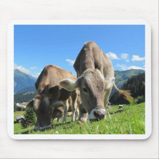 Cute cows in Austria Mouse Pad