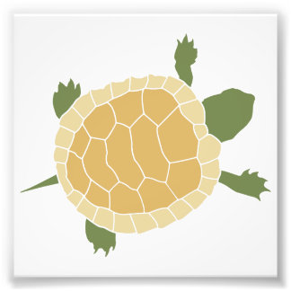 Cute Crawling Little Turtle Tortoise Photographic Print