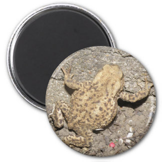Cute Crawling Toad Magnet