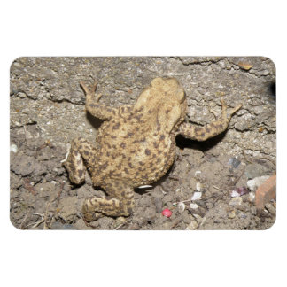 Cute Crawling Toad Premium Magnet