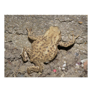 Cute Crawling Toad Print