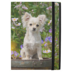 iPad Pro Powis Case with Chihuahua Phone Cases design