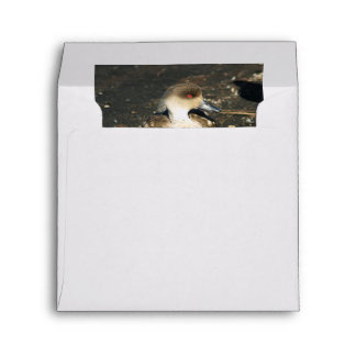 Cute Crested Duck Envelope