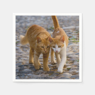 Cute Cuddly Cats Kittens Friends Stony Path Photo Paper Napkin